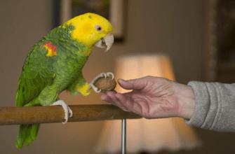 Говорящие попугаи