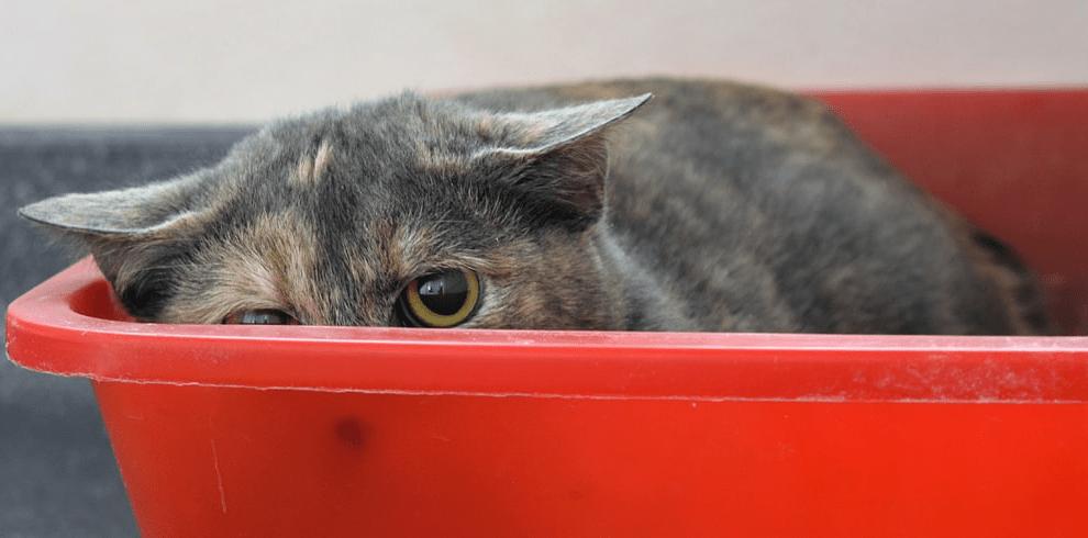 У кота понос и рвота