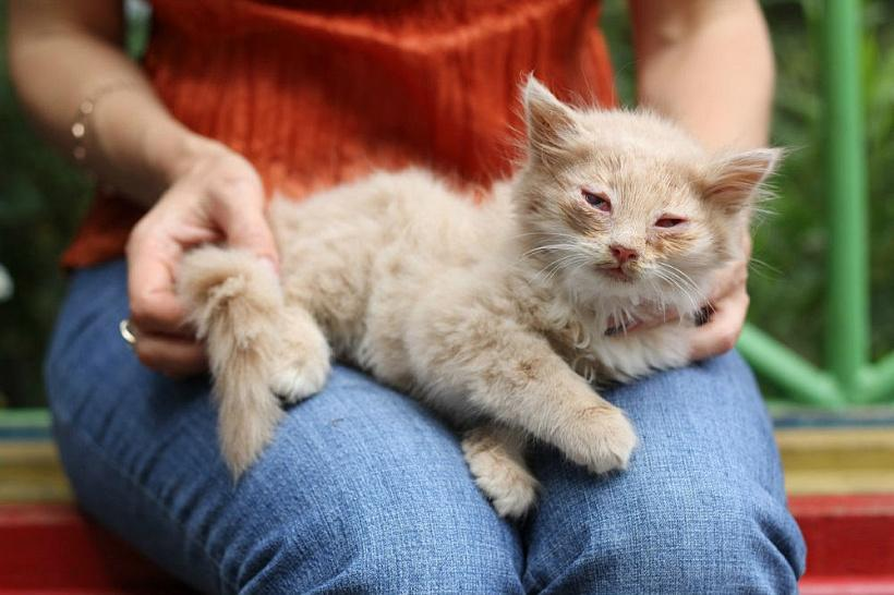 Чумка у кошек - признаки