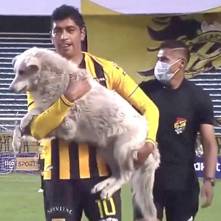 8 собак, которые неожиданно стали звёздами футбольных матчей