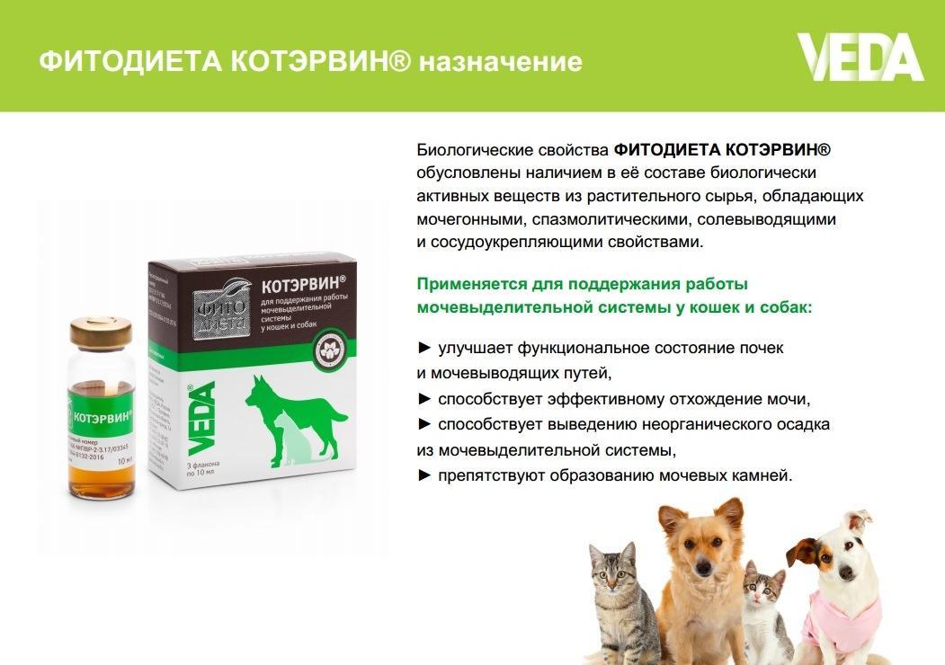 Препарат котэрвин для кошек