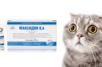 Максидин для кошек - главное фото