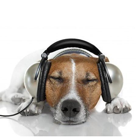 Музыкальный плейлист для кошек и собак