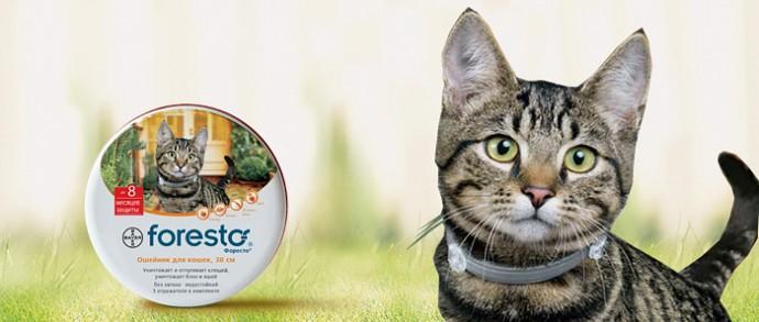 Ошейник форесто для кошек - принцип действия