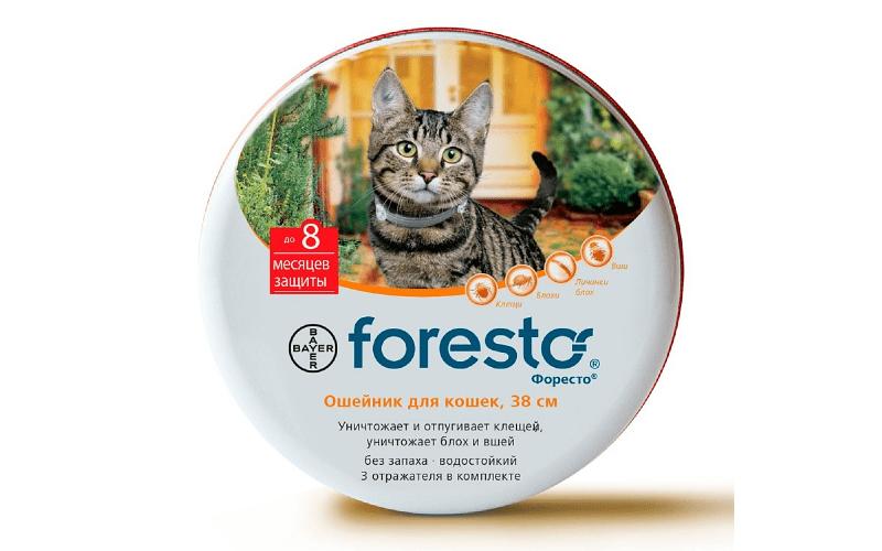 Ошейник Форесто при защите кошек