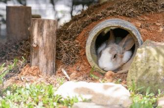 Почему умирают кролики - главное фото