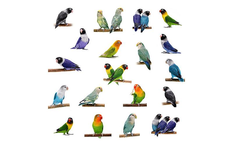 Разновидности попугаев - главное фото