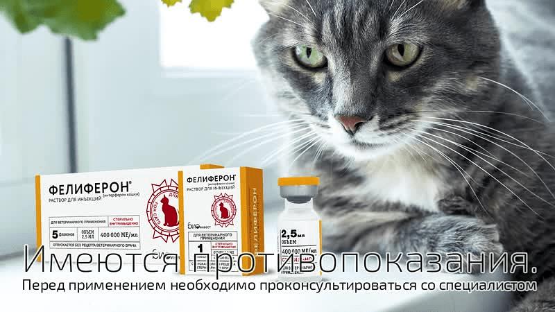 Состав Фелиферона для кошек