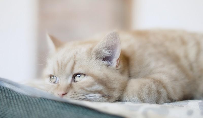 виды гельминтов у кошек - главное фото