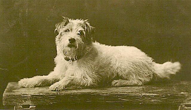 4 королевские собаки, хранившие поразительную верность своим хозяевам