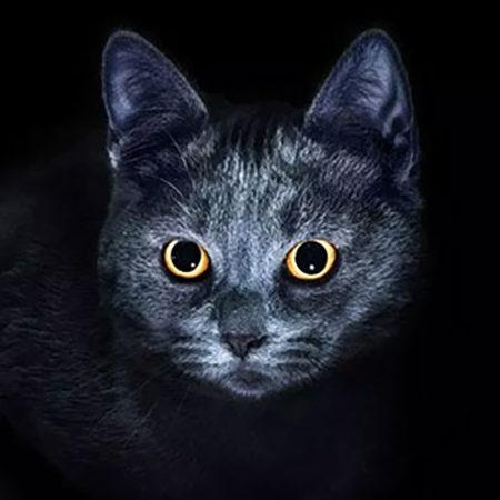 5 неочевидных мифов о кошках, которые должен знать любой владелец