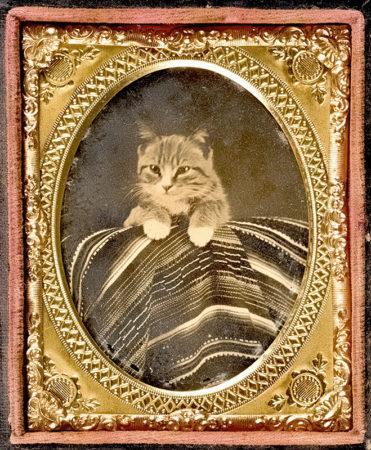 Табби, Дикси и Тибблс: кошки, которые делали мировую историю
