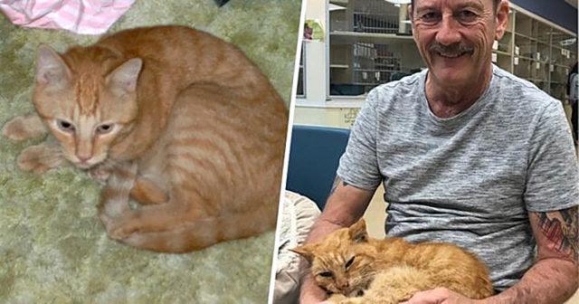 7 невероятных историй про кошек и собак, которые выжили в экстремальных условиях
