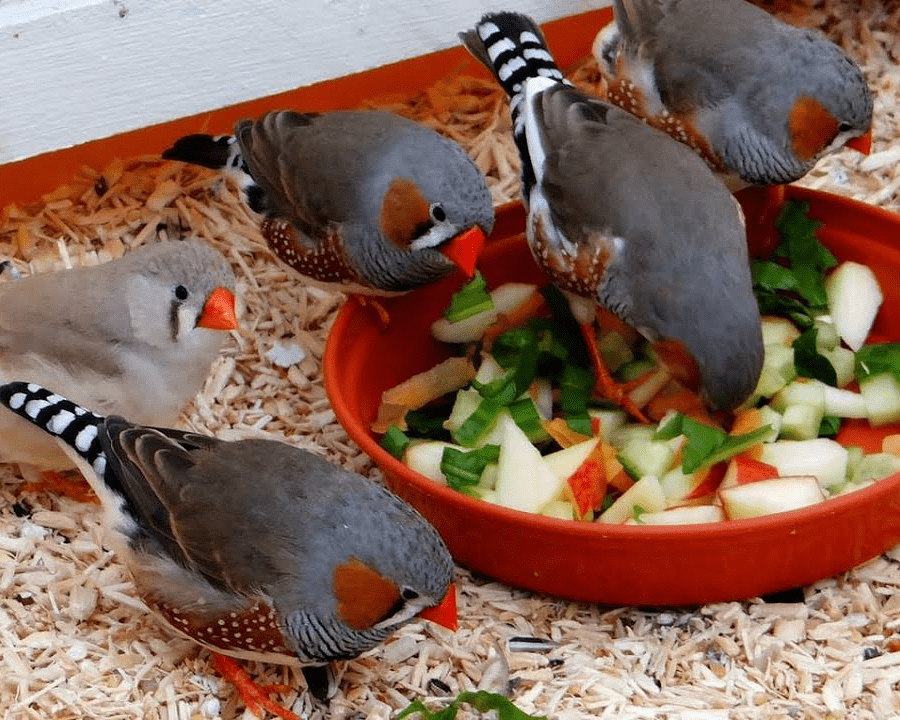 Фрукты, овощи для амадин