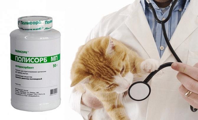 Полисорб препарат для кошек - противопоказния
