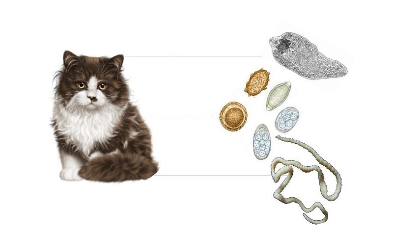 У кошки завелись глисты