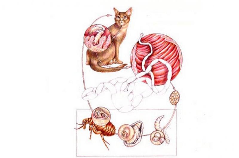 У кошки - глисты