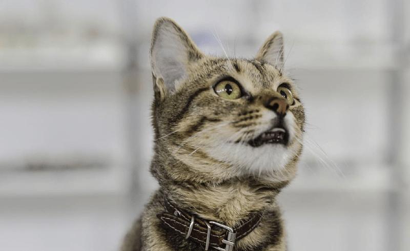 У кота потекли слюни изо рта