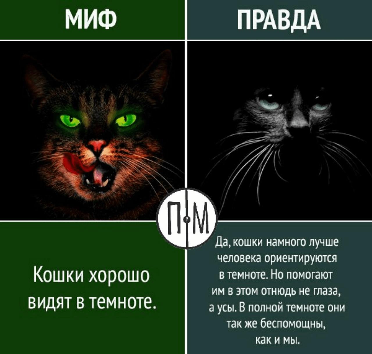 Зрение кошек в темноте