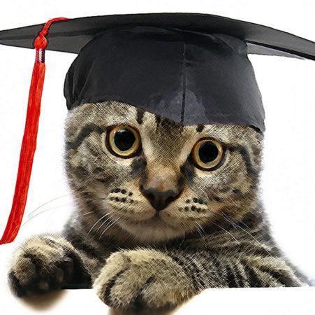 Кошки – мошенники поневоле: 3 истории о поддельных дипломах, выданных котам настоящими организациями
