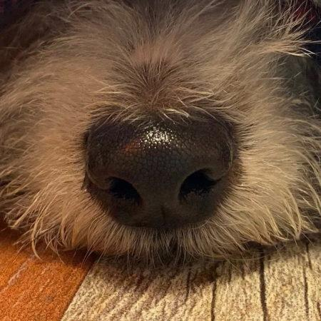 Распространённые факты о поведении собак чаще всего оказываются лживыми
