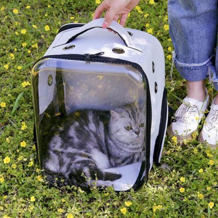 АлиЭкспресс для кошек: выбираем переносную клетку