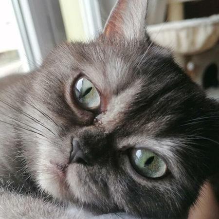 Недовольная кошка, у которой теперь появился новый дом