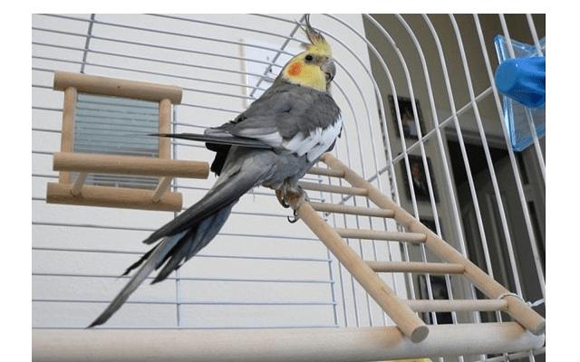 026 - клетка для попугая своими руками