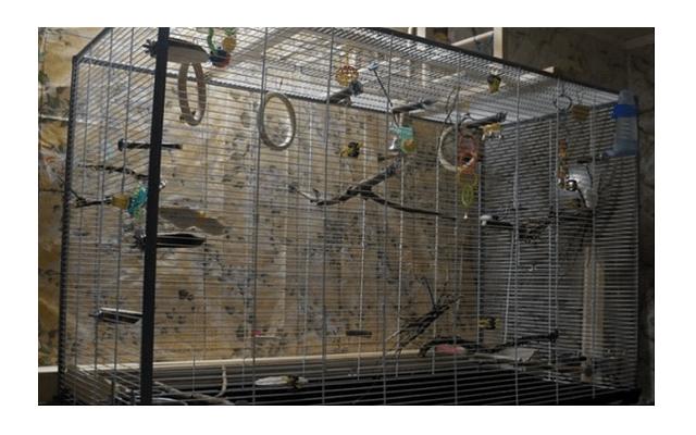 029 - клетка для попугая своими руками
