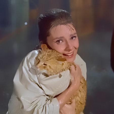 Orangey: почти оскароносный кот американского кино