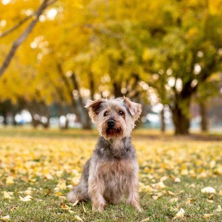 Адам Макартур: герой, которому собаки приносят только радость