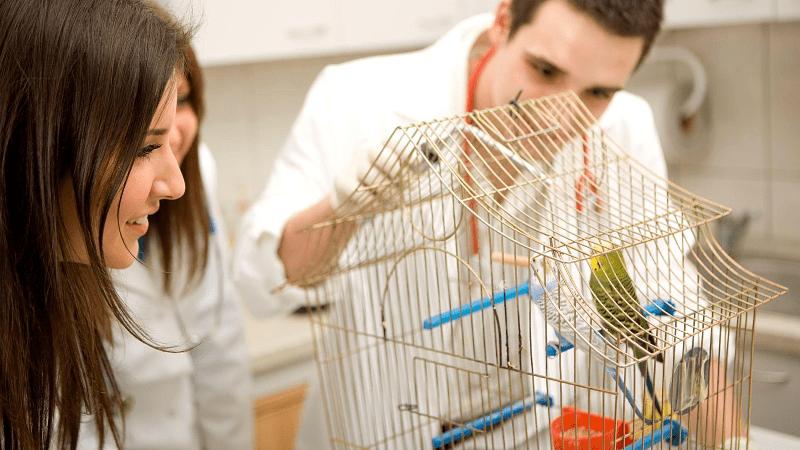 Чем болеют волнистые попугайчики - главное фото