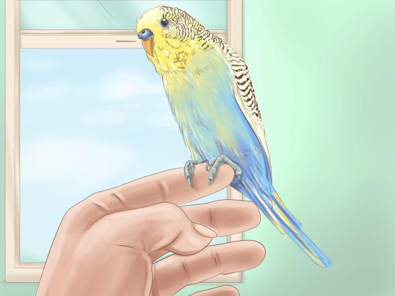 Чем болеют волнистые попугайчики - эктопаразиты