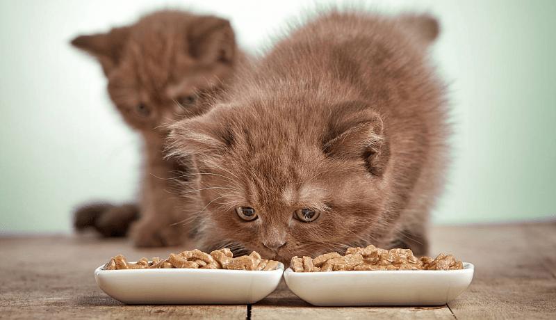 Чем кормить котят - главное фото