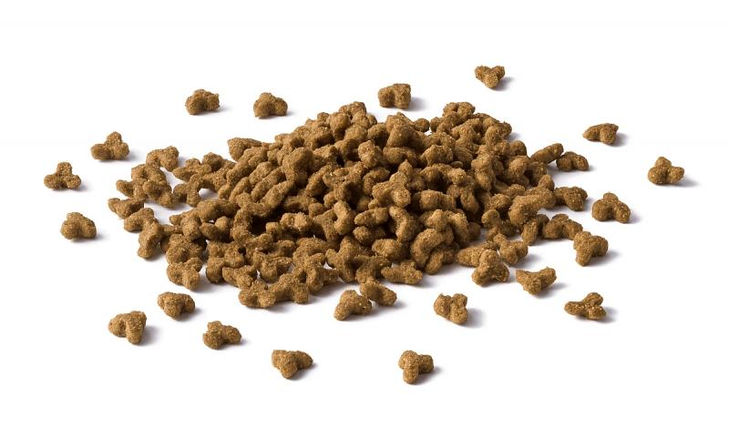 Чем кормить котят - сухой корм