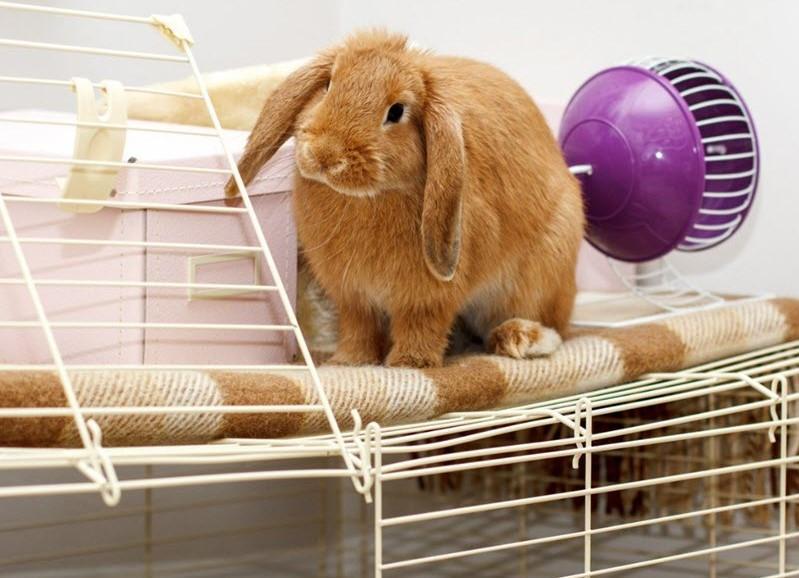Габариты жилища для кролика