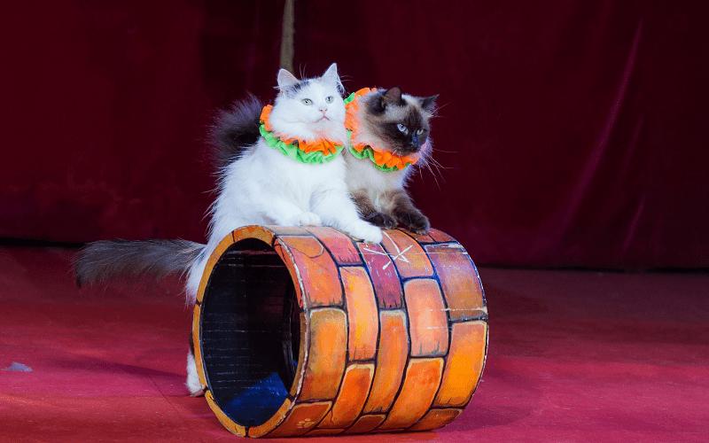 Подготовка к обучению кошек
