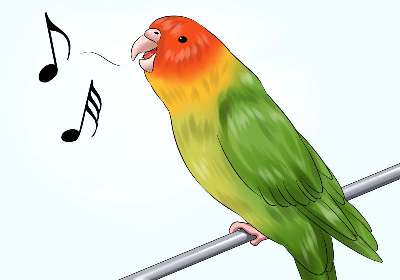 Как обучить волнистого попугая человеческой речи - под магнитофон