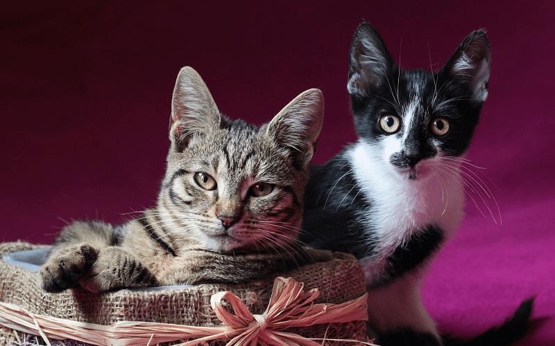 Как определить возраст кошки - главное фото