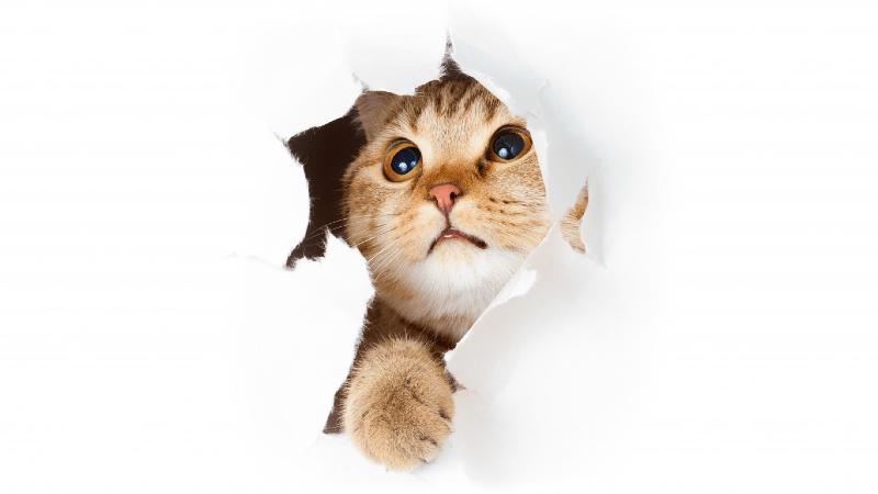 Почему кошки дерут обои и мебель