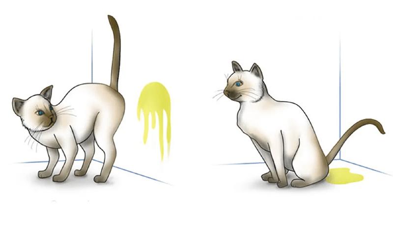 Почему кот писает, где попало