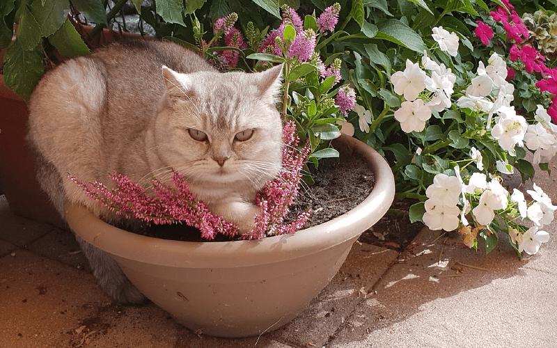 Как отучить кошку лазить в цветочные горшки