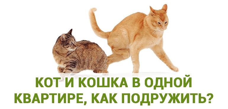 Как подружить кота и кошку - главное фото