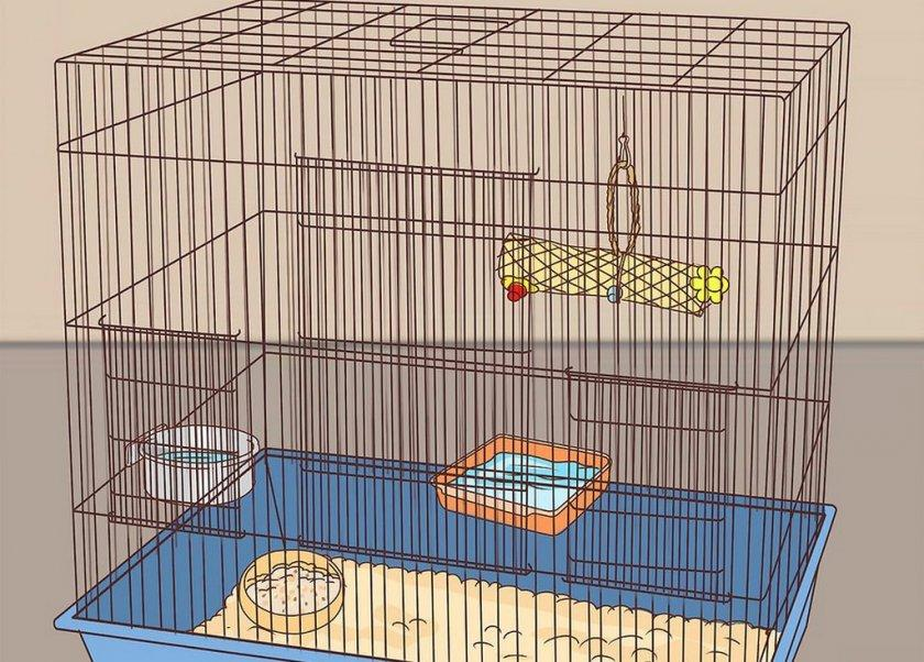 Как сделать клетку для кореллы - требования
