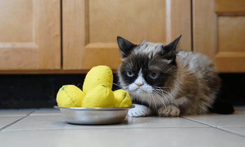 Какой запах не любят кошки - главное фото