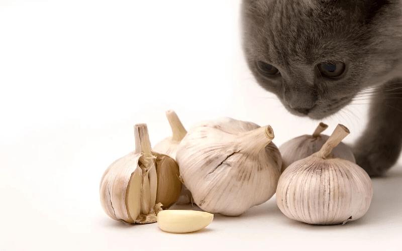 Какой запах не любят кошки - чеснок