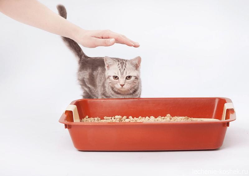 Как приучить кошку к лотку повторно