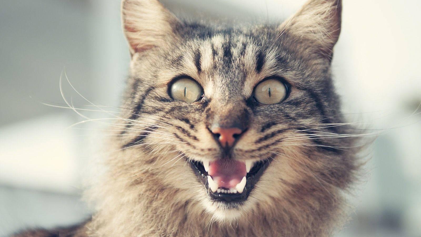 Кошка усы