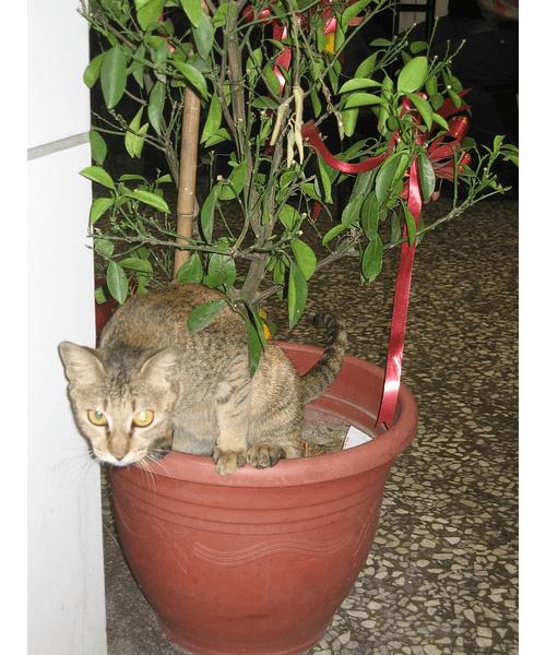 Кот гадит в цветочном горшке
