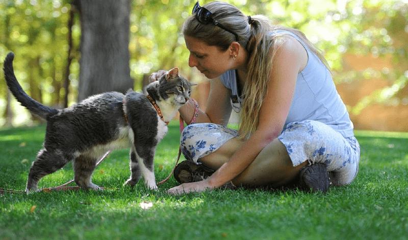 Простые команды для кошек